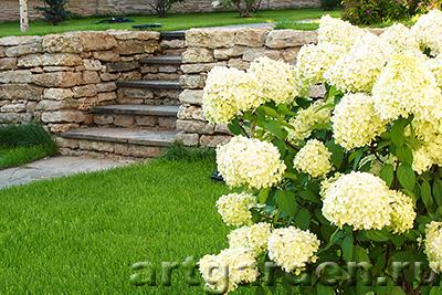 азалии садовые сорта фото